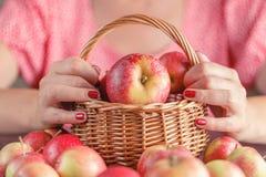 Корзина вполне с яблоками, рукой женщины держа корзину яблока Стоковые Изображения
