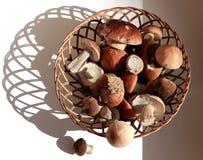 Корзина грибов Сделанные по образцу тени на белой предпосылке стоковая фотография