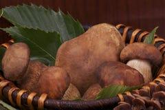 Корзина грибов Стоковая Фотография
