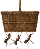 Корзина еды пикника, муравьи, изолированный, смешные Стоковые Изображения RF