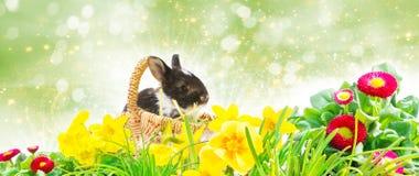 Корзина зайчика пасхи, лужайка пасхи перед Bokeh Стоковые Изображения