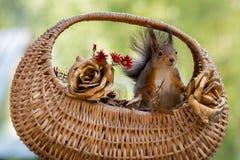 Корзина золотых роз Стоковое Фото