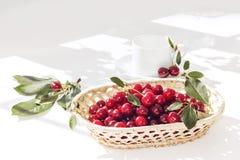 Корзина зрелой вишни плодоовощ плетеная на белом столе Красная ягода Стоковая Фотография