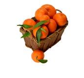 Корзина зрелых мандаринов Стоковое Изображение