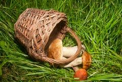 Корзина и грибы Стоковое Изображение RF