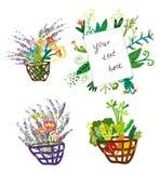 Корзина и цветки установили с флористической карточкой - смешным дизайном, графической иллюстрацией Стоковая Фотография