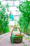 Корзина конца-вверх зеленых цветов в руках женщины Стоковые Фото