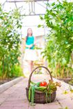 Корзина конца-вверх зеленых цветов в руках женщины Стоковое фото RF