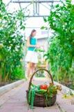 Корзина конца-вверх зеленых цветов в руках женщины Стоковые Изображения RF
