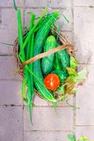 Корзина конца-вверх зеленых цветов в руках женщины Стоковая Фотография