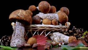 Корзина коричневых грибов подосиновика крышки акции видеоматериалы