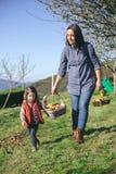 Корзина нося женщины и маленькой девочки с яблоками Стоковая Фотография RF
