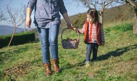 Корзина нося маленькой девочки и женщины с яблоками Стоковое Изображение RF