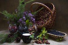 Корзина одичалых ягод Стоковые Изображения RF
