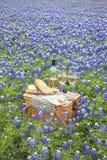 Корзина пикника с вином, сыром и хлебом в холме Countr Техаса Стоковые Фото