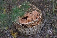 Корзина при redheads стоя под деревом в расчистке леса стоковые изображения rf
