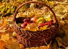 Корзина плодоовощ осенью Стоковое фото RF