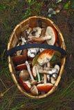 Корзина различных грибов Стоковое фото RF