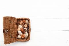Корзина раковин Стоковые Фото