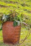 Корзина соломы с тростником Стоковое фото RF