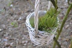 Корзина с ветвью сосны Стоковое Фото