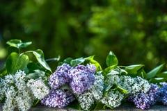 Корзина с вишней на деревянном столе на предпосылке зеленого сада Стоковые Изображения