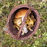 Корзина с грибами выглядит как запрещенный знак на охоте для gribibami или собрания несъедобного вида схематическо стоковые изображения