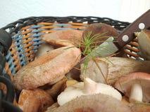 Корзина с грибами леса Стоковые Фотографии RF