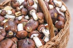 Корзина с грибами на деревянной скамье Стоковое фото RF