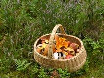 Корзина с грибами Стоковое Изображение