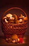 Корзина с грибами Стоковые Фотографии RF