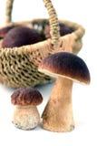 Корзина с грибом плюшки пенни на изолированной белой предпосылке Стоковые Изображения RF