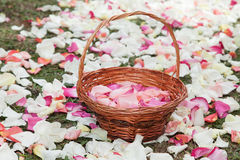 Корзина с лепестками розы в пути лепестков розы Стоковые Изображения
