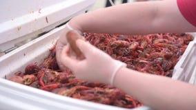 Корзина с креветками и крабом Рука работая с ей Французский рынок в Новом Орлеане сток-видео
