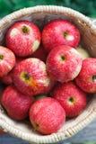 Корзина с кучей сбора яблока в саде падения Стоковая Фотография