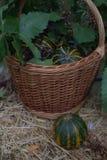 Корзина с немногими тыквами, дуб предпосылки выходит, ягоды древесина pomegranate в октябре виноградин украшения каштана осени Ор Стоковые Изображения