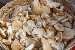 Корзина с свежими грибами St. George Стоковые Изображения RF