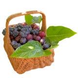 Корзина с свежими сливами и виноградинами Стоковое Изображение
