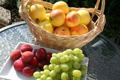 Корзина с сладостными шведскими яблоками ароматности на таблице в саде вместе с сливами и виноградинами Виктории Стоковое Изображение RF