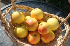 Корзина с сладостными шведскими яблоками ароматности Стоковое Фото