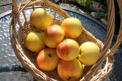 Корзина с сладостными шведскими яблоками ароматности Стоковые Фотографии RF