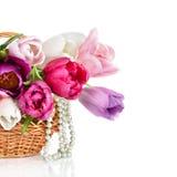 Корзина с цветастыми букетами изолированных цветков тюльпанов весны Стоковая Фотография