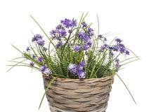 Корзина с цветками Стоковое Изображение