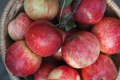 Корзина с яблоками, предпосылка сбора осени Стоковое Фото