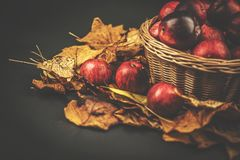 Корзина с яблоками, blackbackground осени плетеная листьев Стоковое фото RF