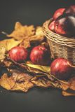 Корзина с яблоками, blackbackground осени плетеная листьев Стоковая Фотография RF