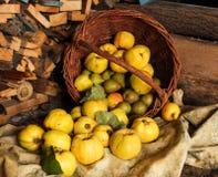 Корзина с яблоками, айвой и грушей стоковые изображения rf