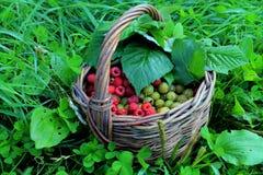 Корзина с ягодами Стоковая Фотография