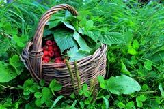 Корзина с ягодами Стоковые Фото