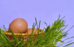 Корзина с яичками на траве. Стоковое Изображение